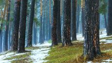 Prognoza pogody na pięć dni: dominacja chłodu, śniegu i silnego wiatru