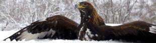 Podkarpacie bez młodych ptaków. Przedłużająca się zima osłabiła lęgi